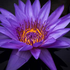 Christine Biondi - Perfect Bloom