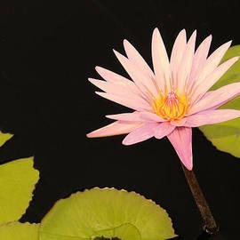 Rosalie Scanlon - Perfect Pink