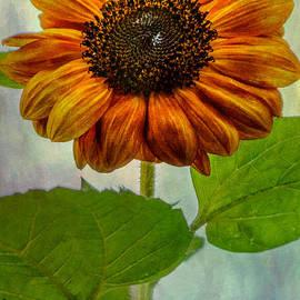 Laura Duhaime - Perfect Sunflower