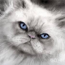Svetlana Novikova - Persian Cat with blue eyes