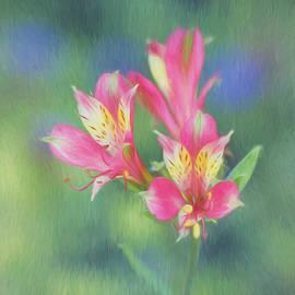 Kim Hojnacki - Peruvian Lily