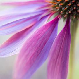 Caitlyn  Grasso - Petal Pink