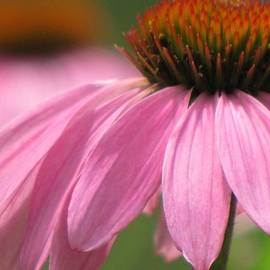 Lori Frisch - Petals Pink