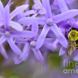 Olga Hamilton - Petrea Racemosa and Bumblebee