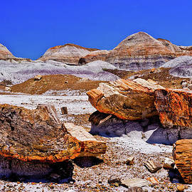 Bob and Nadine Johnston - Petrified Forest - Painted Desert