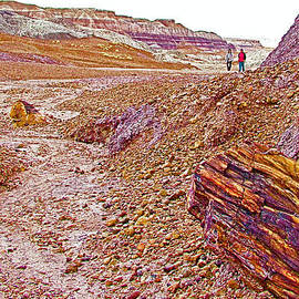 Ruth Hager - Petrified Logs on Blue Mesa Trail in Petrified Forest National Park-Arizona