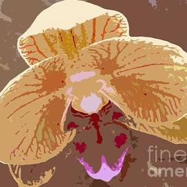 Barbie Corbett-Newmin - Phalaenopsis Synopsis