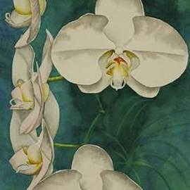 Heather Gallup - Phalaenopsis Beauty