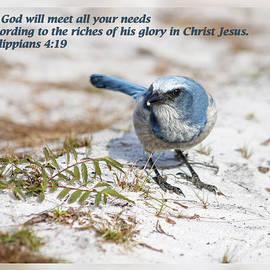 Dawn Currie - Philippians 4 19