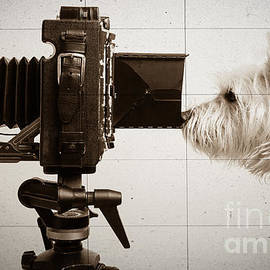 Edward Fielding - Pho Dog Grapher - Ground Glass View