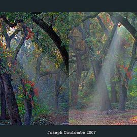 Joseph Coulombe - Phorest Light