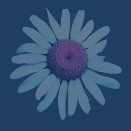 Photoreal Daisy - Fine Art
