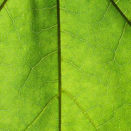 Alexander Senin - Photosynthesis - Featured 3