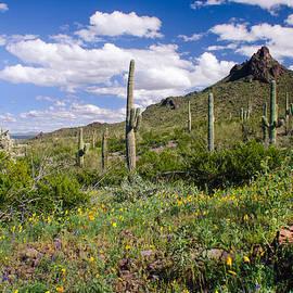 Barbara Manis - Picacho Peak State Park