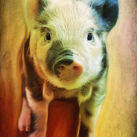 Barbara Orenya - Pig is beautiful