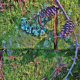 Todd Breitling - Pine Cones on Cedar
