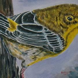 Richard Goohs - Pine Warbler on a Tree Trunk