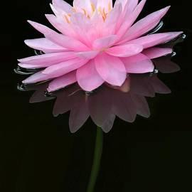 Sabrina L Ryan - Pink and Alone