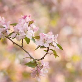 Kim Hojnacki - Pink Blossoms
