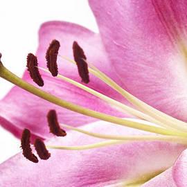 Kim Andelkovic - Pink Curves