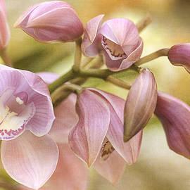 Julie Palencia - Pink Cymbidium Orchids