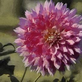 Jeff Kolker - Pink Dahlia