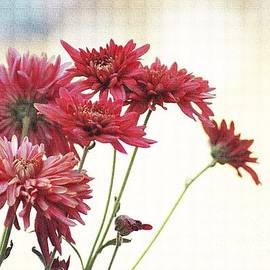 Veena Nair - Pink  Daisy Blooms