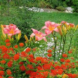 MTBobbins Photography - Pink Daylilies with Butterfly Weed