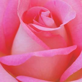 Irina Wardas - Pink Delight