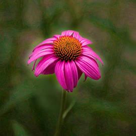 Omaste Witkowski - Pink Echinacea Digital Flower Photo.Painting Composite Artwork by Omaste Witkowski