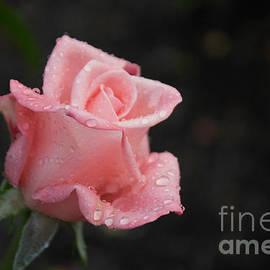 Arlene Carmel - Pink Elegance