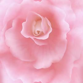 Jennie Marie Schell - Pink Fantasy Begonia Flower