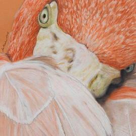 Jeanne Fischer - Pink Flamingo 2