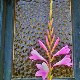 John King - PINK FLOWER and WINDOW