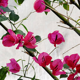 Glenn Morimoto - Pink flowers