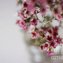Inspired Arts - Pink Flowers