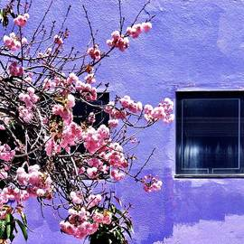 Julie Gebhardt - Pink Flowers