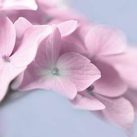 Jennie Marie Schell - Pink Hydrangea Flower Macro