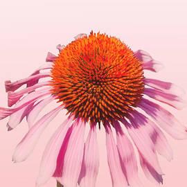 K Hines - Pink