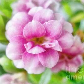 Sergey Lukashin - Pink Kalanchoe flower