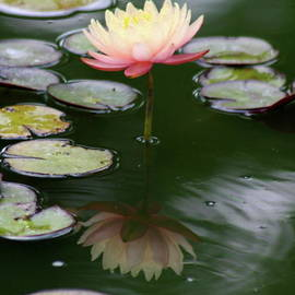 Christiane Schulze Art And Photography - Pink Lady In Green Water