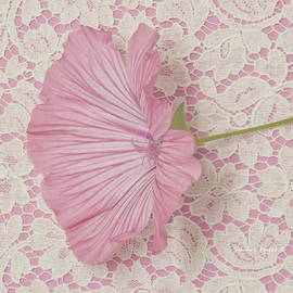 Sandra Foster - Pink Lavatera Blossom On Vintage Lace - Macro