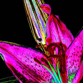 Phyllis Denton - Pink Lily And Bud Pop Art