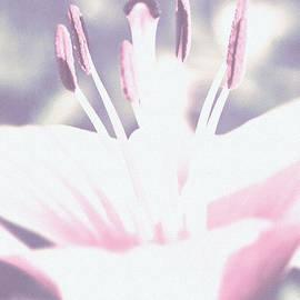 Lali Kacharava - Pink lily