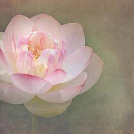 Kim Booth - Pink Lotus