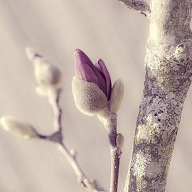 Julie Palencia - Pink Magnolia Bud