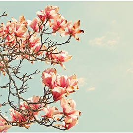 Brooke T Ryan - Pink Magnolia Flowers Against Blue Sky