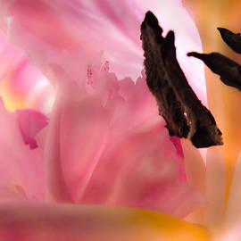 Karen Wiles - Pink Mellow Yellow