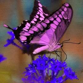 Bruce Nutting - Pink Monarch Butterfly 2014 Calendar