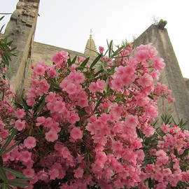 Pema Hou - Pink Oleander